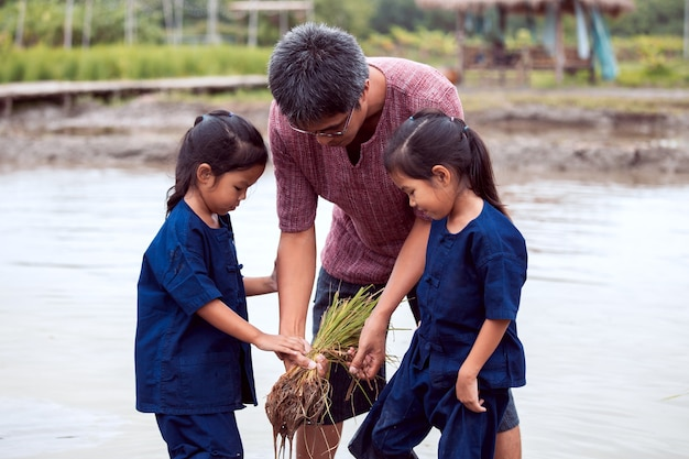 Father farmer teaching his children planting rice in the rice field