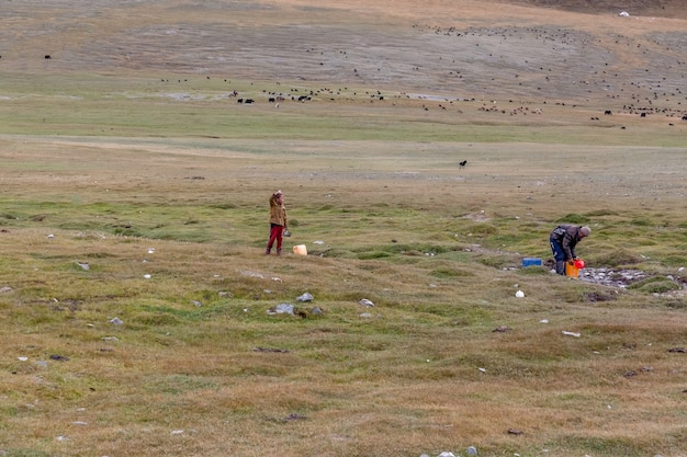 Father and son take water into a bucket from a small river. herd of yak sheep and bulls in the background