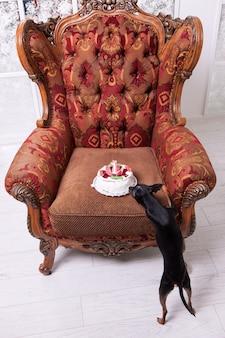 Любимое празднование дня рождения питомца. вкусный торт для той терьера