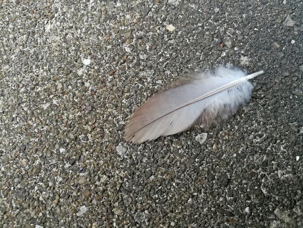 Feather on concrete floor