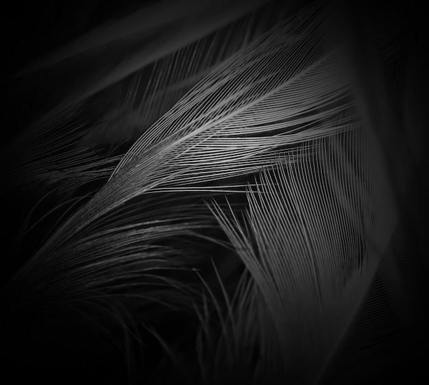 Feather dark black abstract background