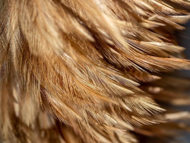 Feather duster texture background.