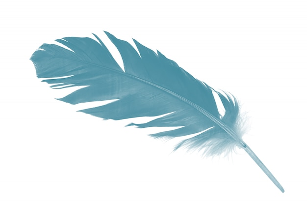 Feather green turquoise on white background