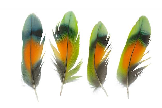白い背景で隔離の羽