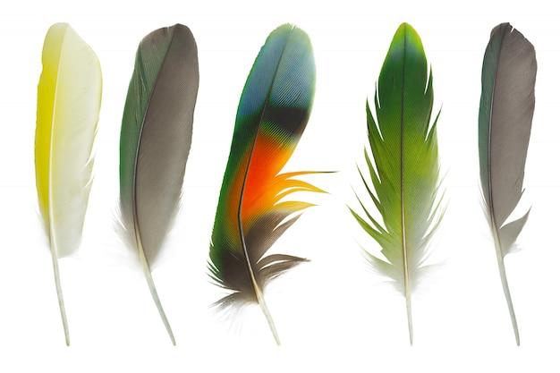 白い壁に分離された羽