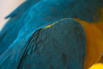 Feather of Macaw, bird parrot, nature texture background
