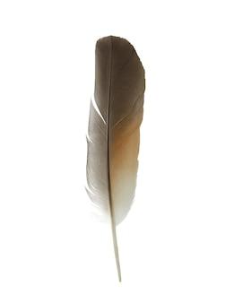 白い背景の上の羽