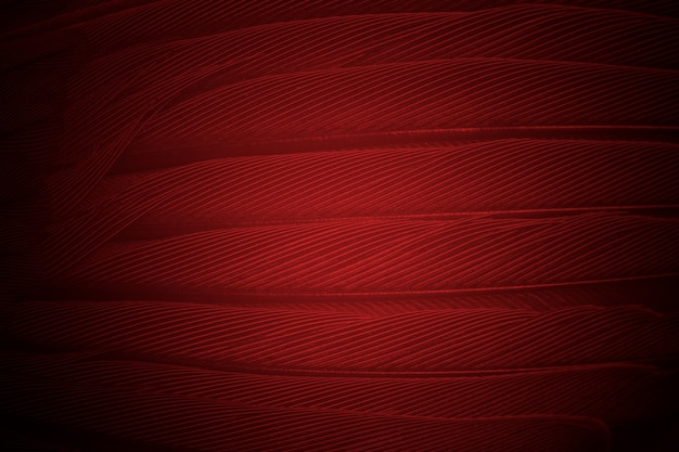 Feather pattern texture background