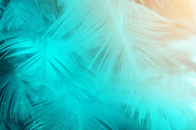 Feather texture background with orange light