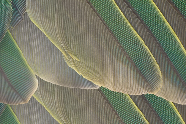 Feather texture background