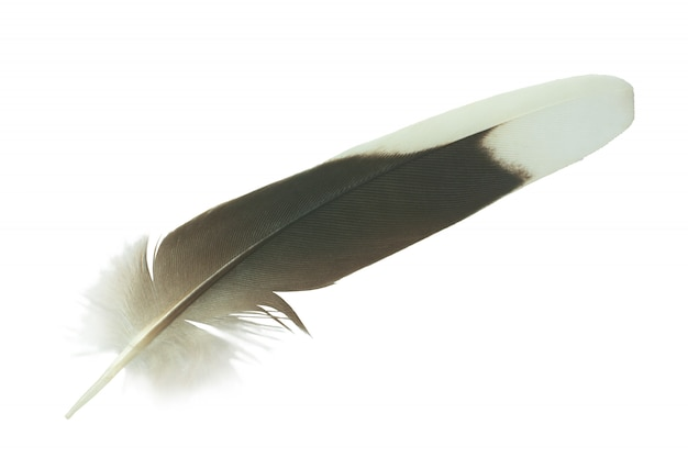Feather on white wall