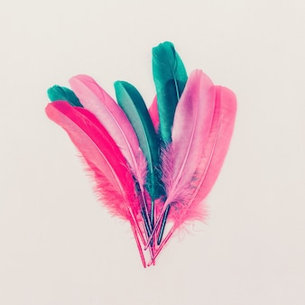 羽毛。ファッション写真。ミニマルなスタイル