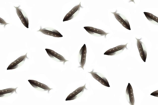 격리 된 흰색 배경에 깃털 원활한 패턴