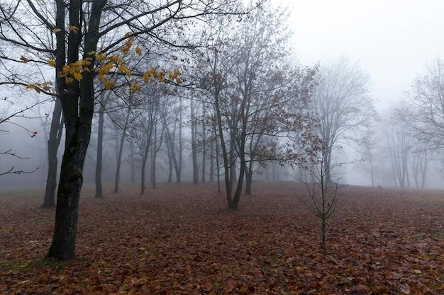 Особенности осенней погоды в лесу или в парке, деревья с разноцветной разноцветной листвой, солнечная погода