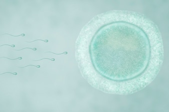Fecundation of human ovule with sperms