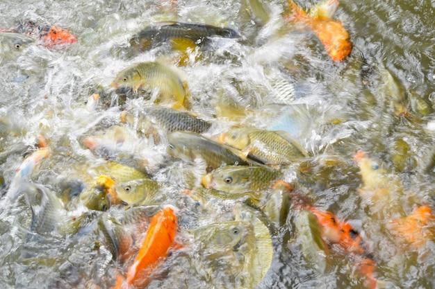 Feed the fish school of fish.blur