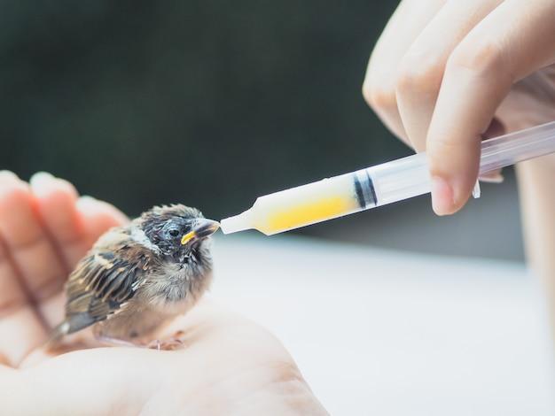 Feed food to sparrow bird