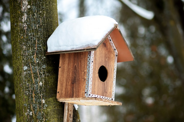 Feeder for birds in snow in winter forest