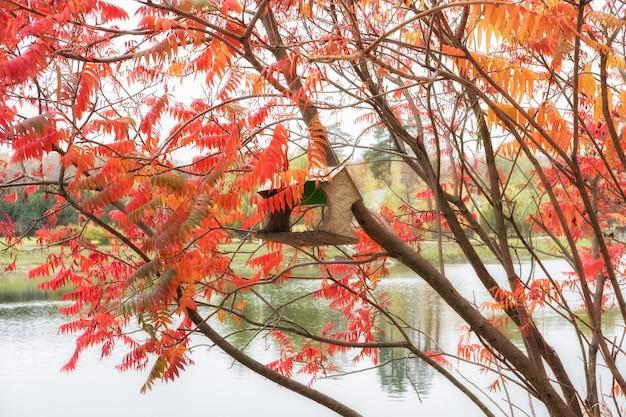 Кормушки для птиц в городском парке