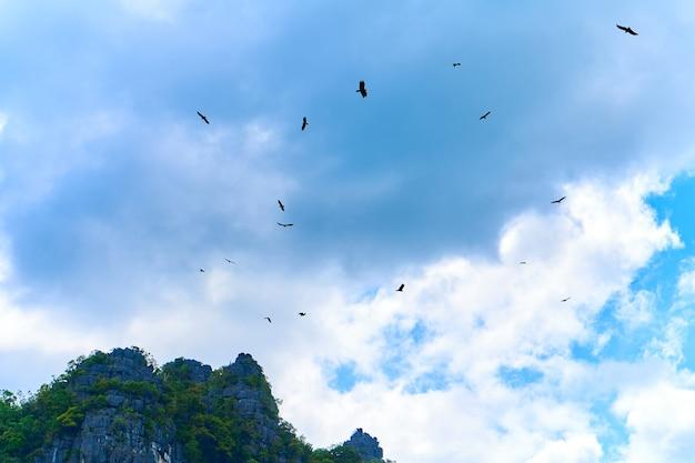 독수리 먹이주기. 음식을 기다리는 하늘에서 돌고 독수리의 무리.