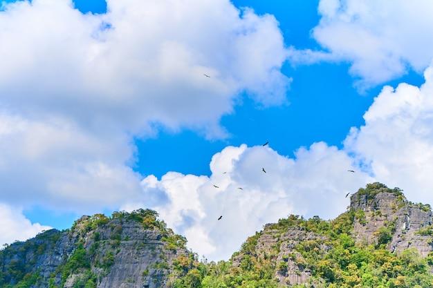 ワシに餌をやる。食べ物を待って空を旋回するワシの群れ