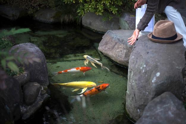 池に鯉を餌