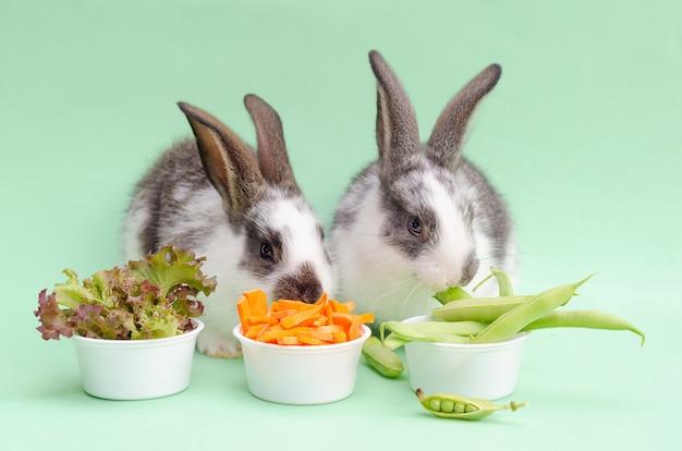 ペットに餌をやる。野菜を食べる小さな赤ちゃんウサギ