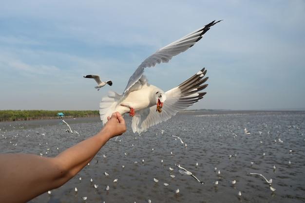 Feeding seagull feeding seagull on hand