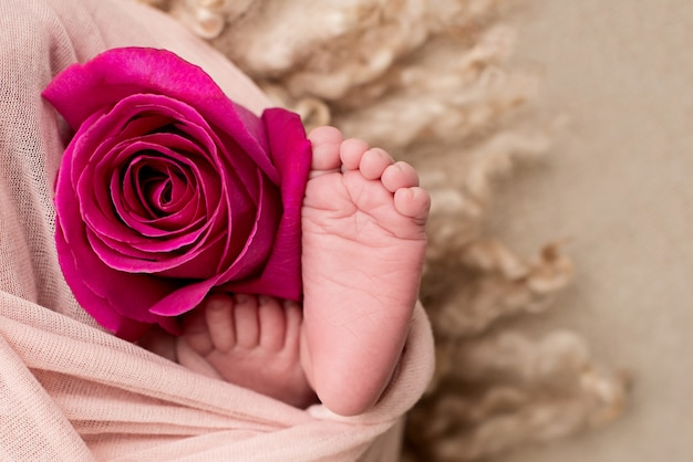 Feet of a newborn baby with a rose flower. motherhood .