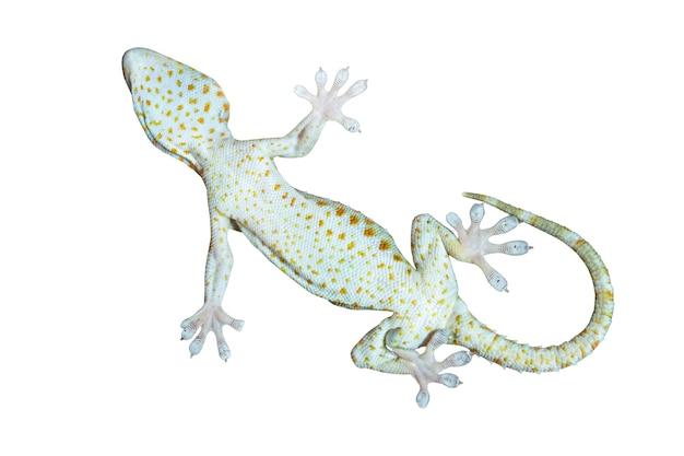 흰색 바탕에 도마뱀붙이의 발