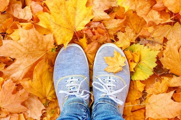 여름의 배경에 가을 잎의 배경에 발