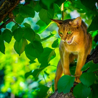Felis catus demonstrates a bitter grunge sitting on an apple tree branch
