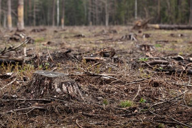 森の中で倒れた松の木。森林伐採と違法伐採、違法木材の国際貿易。森の中で伐採された生きている木の切り株。破壊野生生物。木材の輸出入