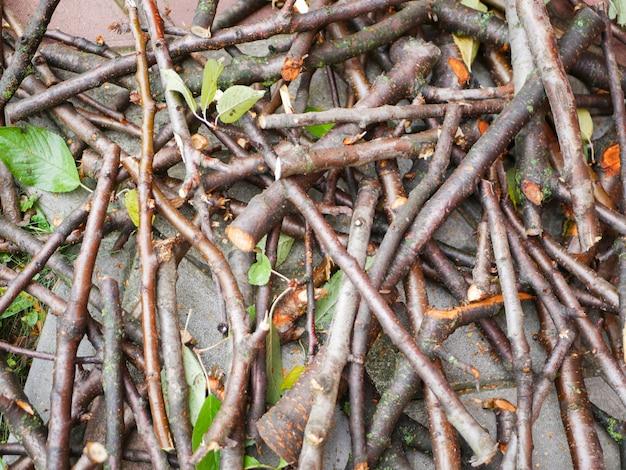 薪用の倒木。薪用に切った木材の断面。伐採されたポプラの年輪。新鮮な製材のスライスのテクスチャ。