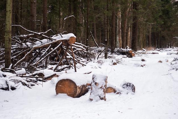 冬の森の雪の中で倒れた木。冬の森林伐採。