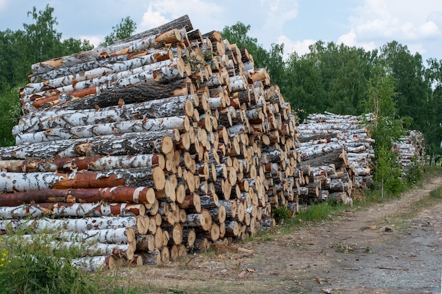 Felled tree trunks, chipped firewood, birch trunks are stacked on top of each other