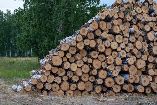 Срубленные стволы деревьев. дрова рубят, стволы березы складываются в стопки.