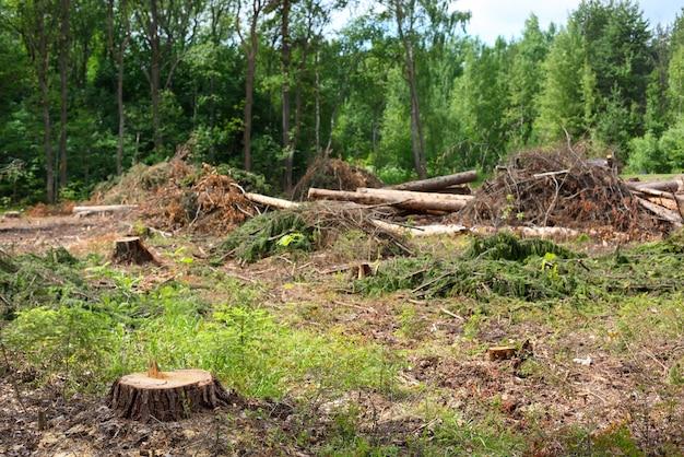 Срубленные деревья в летний день