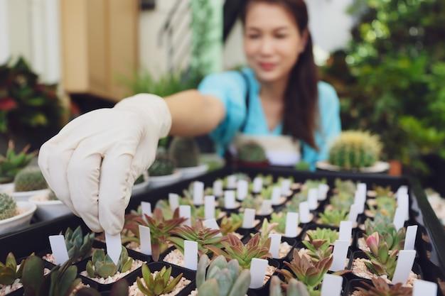 Женский агроном сидит среди небольшого растения и добавляет бирку с именем на мини-кактус в небольшом горшке, чтобы классифицировать различные виды семейств и видов или цены.