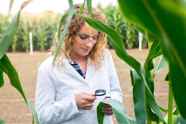 Female agronomist using magnifier to check quality of corn crops in the field