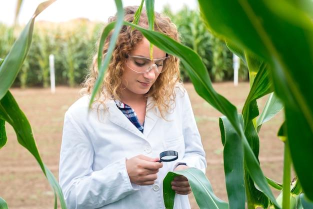拡大鏡を使用して畑のトウモロコシ作物の品質をチェックする女性農学者