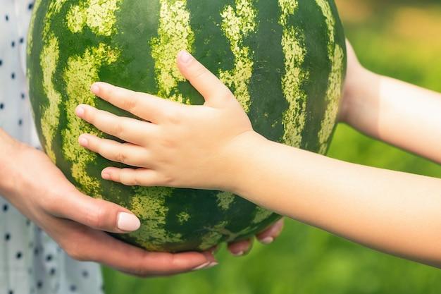 여성과 아기의 손이 수박 전체를 가까이서 들고 있고, 어린 소녀와 젊은 여성의 손이 녹색 수박을 들고 있습니다