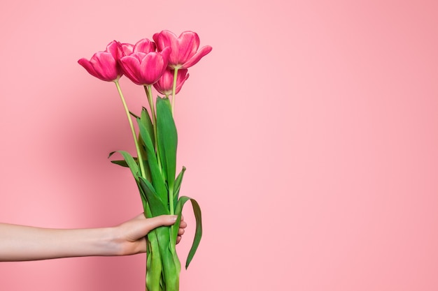 Female arm holds a bouquet of pink tulips isolated on a light pink background
