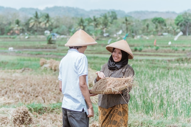 Female asian farmers show their rice yields to male farmers in paddy fields