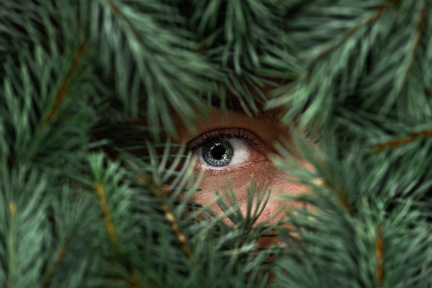 Female blue eye with eyelashes looks through green spruce branches.