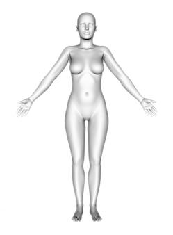 여성의 몸