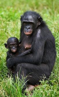 赤ちゃんと女性のボノボ。コンゴ民主共和国。ローラヤボノボ国立公園。