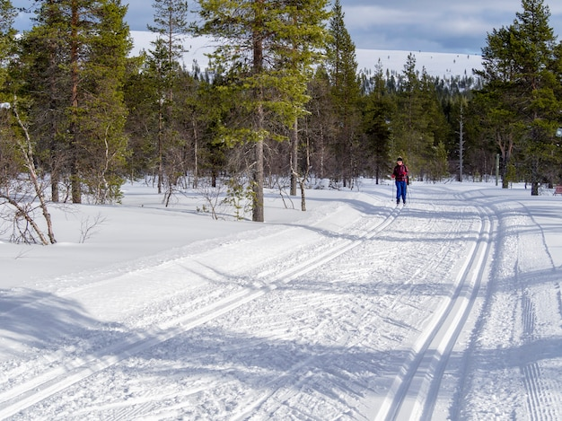 A female cross-country skier in the finland forest