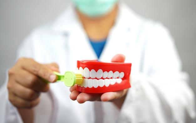 Женский стоматолог держит зубной протез и зубную щетку