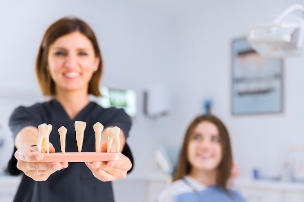 Female dentist showing different types of teeth model at dental clinic